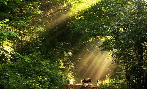 森林旅游游客超10.5亿 景好也怕