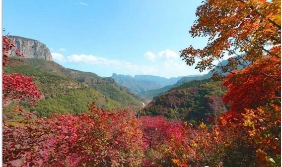 满山秋红叶风景