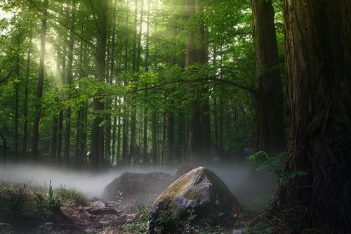 北京延庆投入逾50亿元打造城市森林生态系统