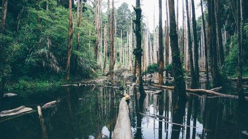我国已有12条国家森林步道:全长超22000公里