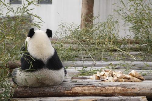 大熊猫国家公园陕西省管理局挂牌