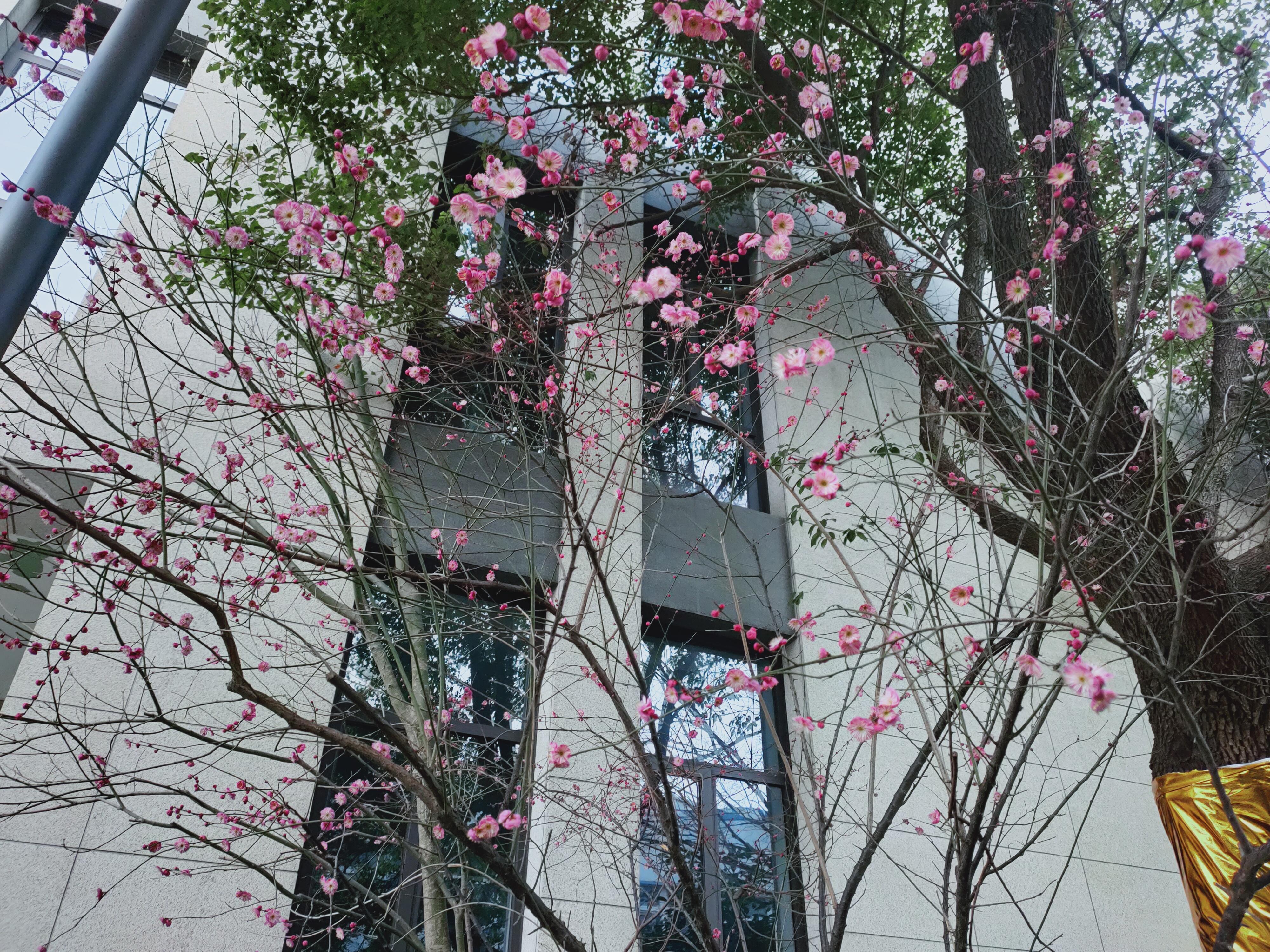 赵秀池:长租公寓健康持续发展还需科学规划 并制定一系列政策