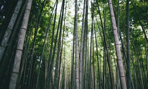 四问竹旅游:景区