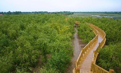 铁汉生态中标5.8亿元滨州乡村旅游PPP项目