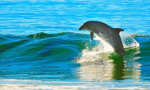 33亿从黑石手中收购SeaWorld 中弘有何新方向?
