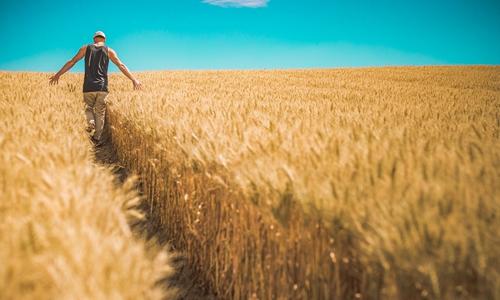 从理论到实践 深度剖析打造田园综合体的4大要素