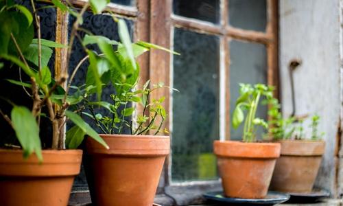 中国94%的民宿房东践行环保 高于全球水平