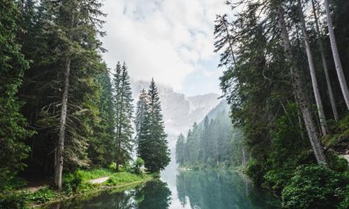 旅行社发力森林旅游 个性产品开发是关键
