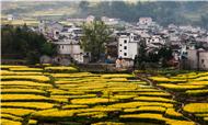 广东乡村旅游大数据分析报告