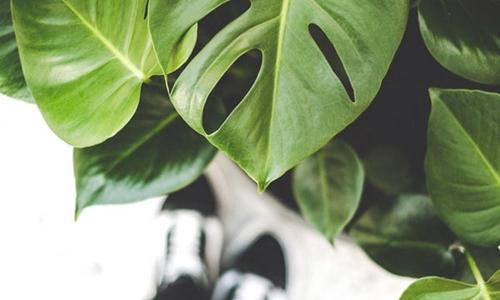 搬来1000株植物 共享办公行业会刮起绿色旋风么?