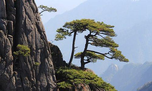 多项业务负增长 黄山旅游上半年营收下滑