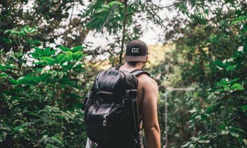 森林旅游进入风口期 多地成立森林旅行社