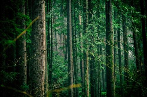 2018年中国森林旅游游客量预计近16亿人次